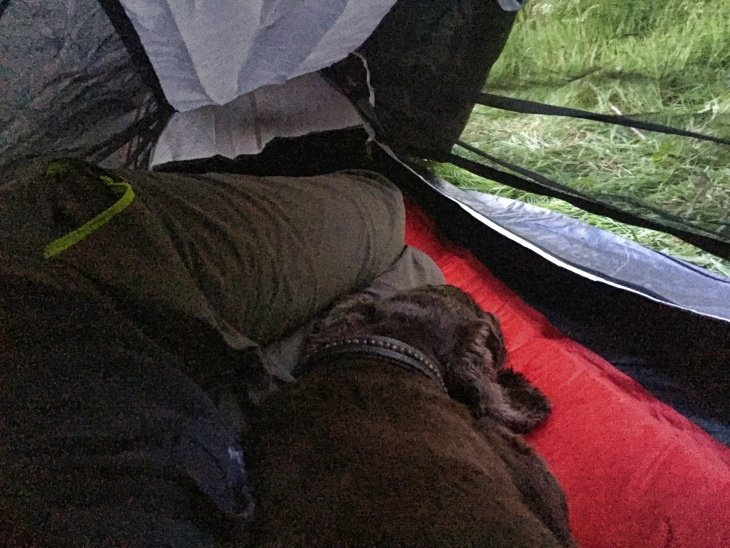 camping with dog rosenna sunley travel blog wildcamping