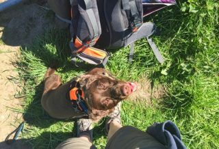 hiking with dog travel blog roseanna sunley