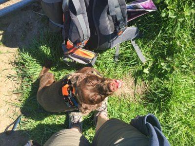 hiking with dog travel blog roseanna sunley