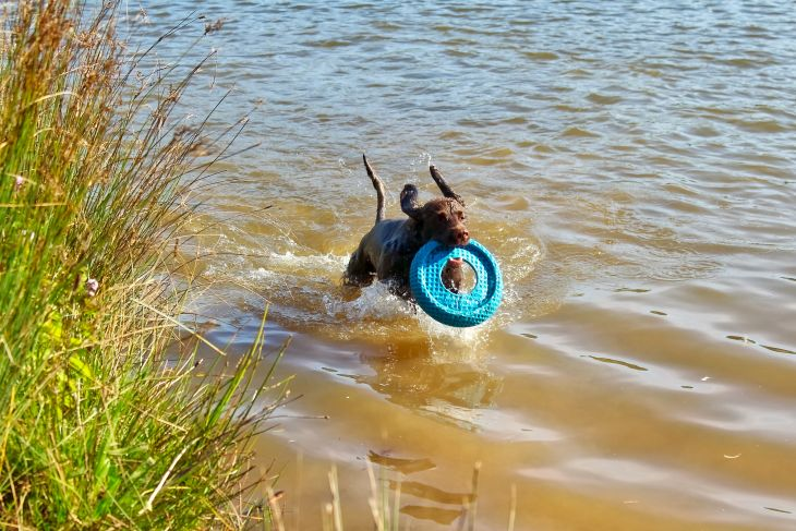 winston in water dog photos roseanna sunley travel