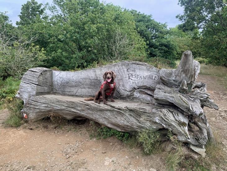ebury hill shrewsbury walks